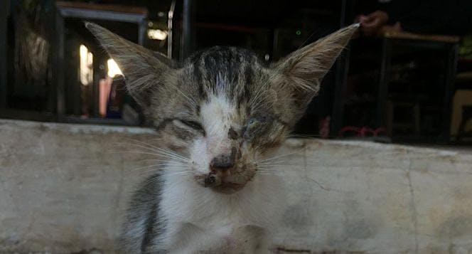 Kucing gelandangan mampu hidup layak