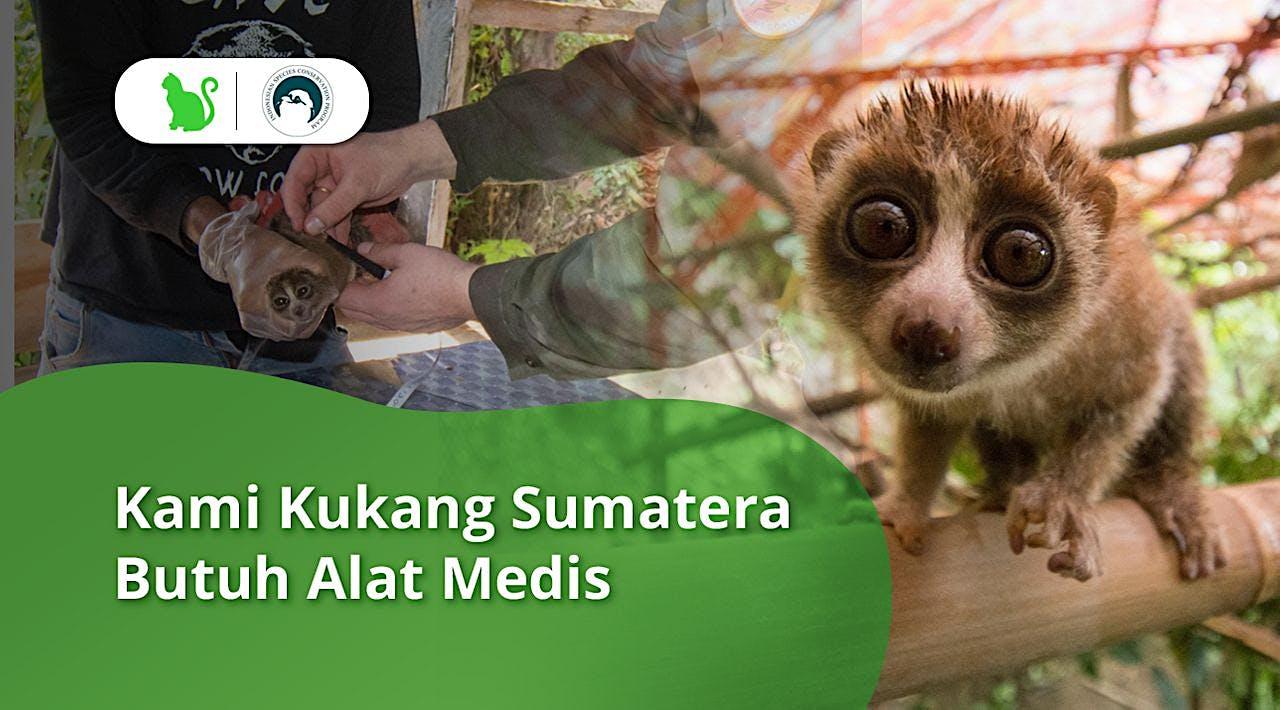 Selamatkan Kukang Sumatra dari Eksploitasi Hewan
