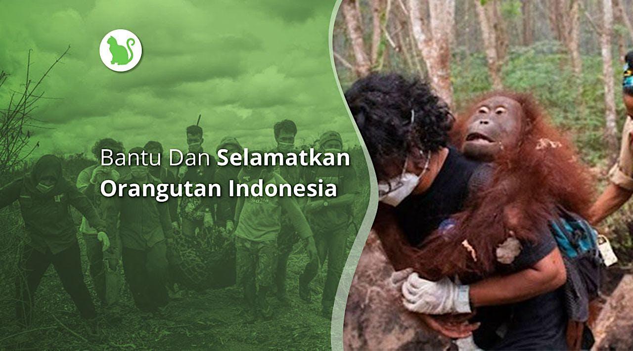 Bantu dan Selamatkan Orangutan Indonesia