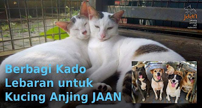 Berbagi Kado Lebaran untuk Kucing Anjing JAAN