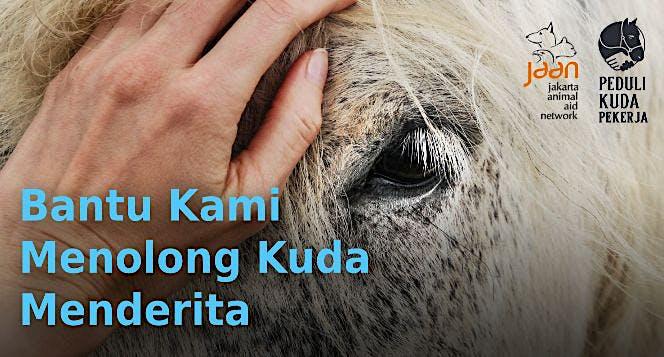 Bantu JAAN Menolong Kuda Pekerja yang Menderita