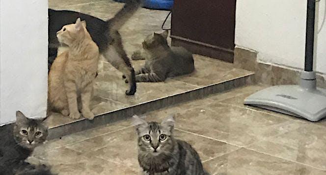 Peduli Kucing Jalanan