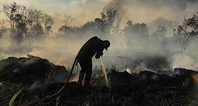 Donasi Korban Bencana Kebakaran Hutan dan Lahan