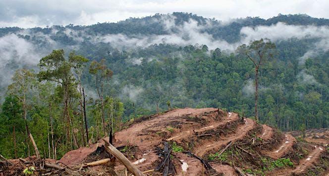 Bersama CAN Borneo Selamatkan Hutan Kalimantan