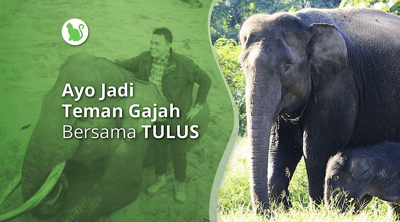 Ayo Jadi Teman Gajah